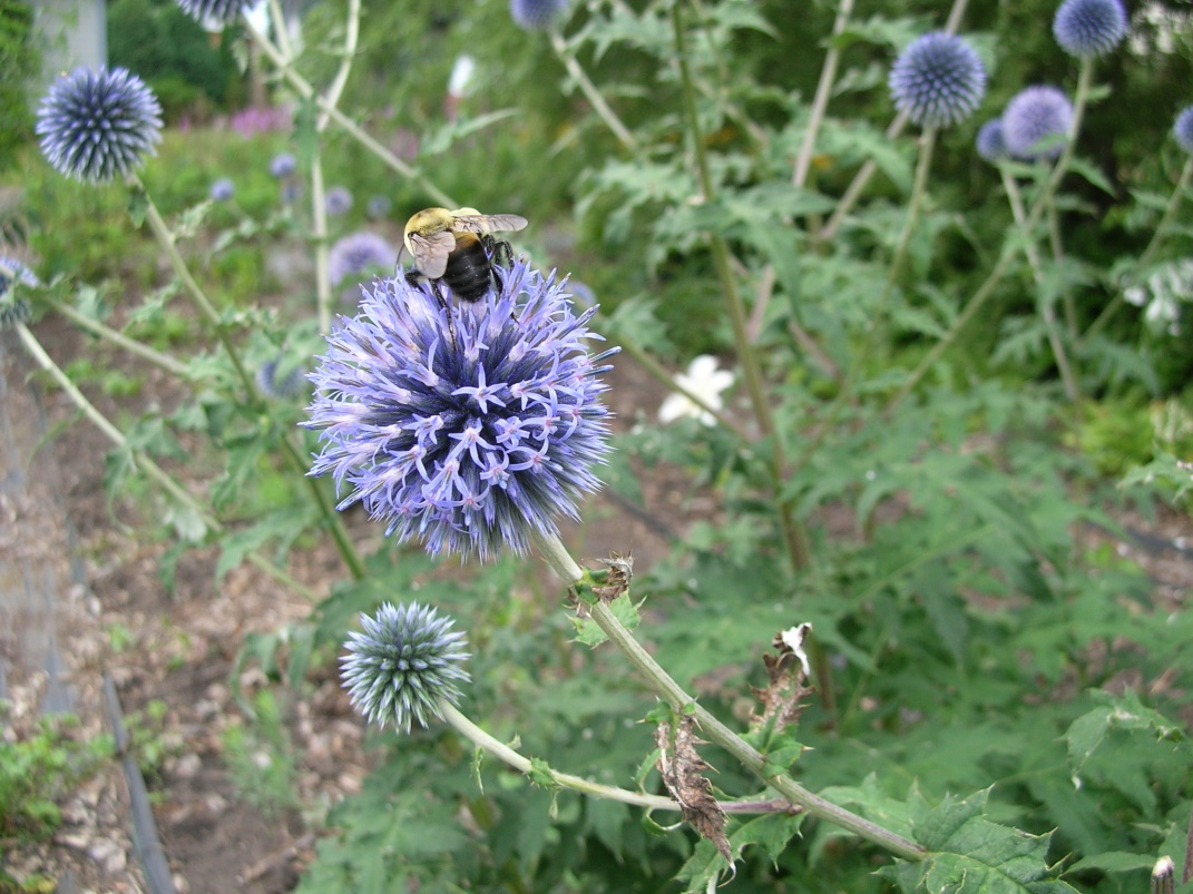 Best Blossoms for Bees - Heritage Flower Farm